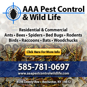 AAA Pest Control & Wild Life Listing Image